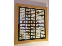 Craven Black Cat Sport Fish Framed Cigarette Cards