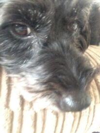 Most loveing dog 😘