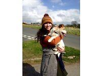 Headingley Home Dog Boarding