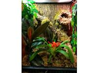 Crested gecko with custom set up