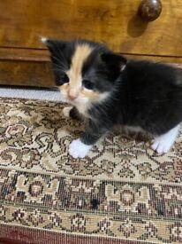 Kittens Exeter