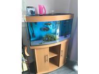 Jewel 180l fish tank