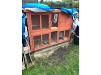 Giant Lop and hutch for sale