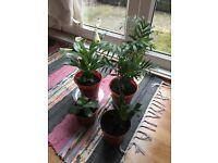 Four plant for £10