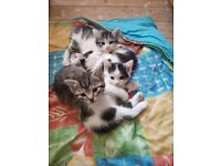3 female kittens (pending collection)