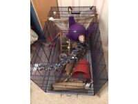 Two young female rats and cage
