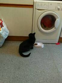 Cat needing loving home