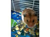Boy hamster
