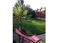 6.5 ft Palm Tree