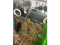 2xdwarf baby hamsters with small home &extras