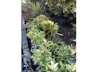 Variety of Plants & Shrubs for Sale