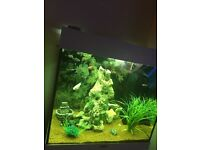Tropical fish tank juel aqurim 125