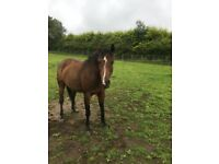 Free horse livery in exchange for..
