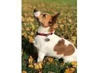 Dogsbuddy Dog Walking / Walker Service