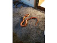 snake and vivarium