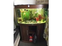 Juwel vision 180 fish tank