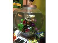 Biorb 30l aquarium fish tank