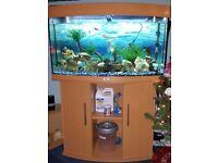 Juwel Vision 180L Aquarium and Cabinet, External Filter, 200w Heater, Fish, Rocks