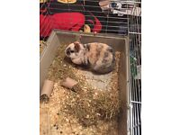 Small rabbit for sale