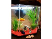 25L fish tank with fish