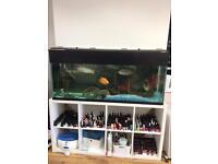 4.5 ft fish tank