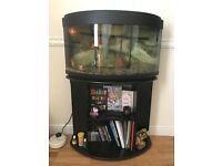 Fish Tank/ fishes for sale