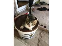 3 kittens for sale £25 each
