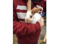 baby bunnies sfs