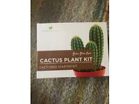 Cactus plant growing kit