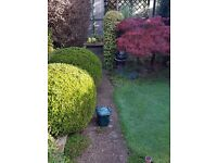 Local Gardener.Grass cutting.Lawn Care. Pruning ‎. Fitting fence.Clean drive way.Regular garden care