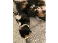Beautiful kittens (all kittens reserved)