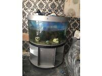 360L fish tank and fish