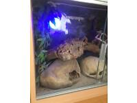 Gecko & viv