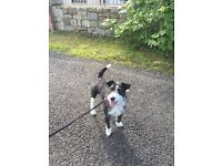 Missing Dog (Buddy)