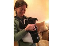 PUPPY / SMALL DOG CARRIER! IDEAL FOR NEW PUPPY PARENTS WHEN SOCIALISING THEIR UNVACCINATED PUPS!