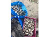 Garden Pebbles (Free Collection)