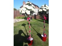 2Nr Artificial Rose Bushes (previously used for wedding)