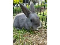 Adorable bunnies!