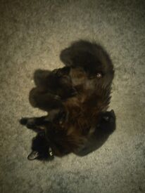 black kittens cats, male and female