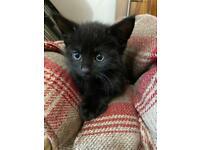 Adorable cute little kittens