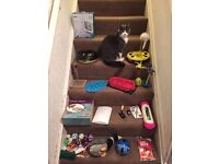 LOTS of Kitten/Cat Toys & Equipment some NEW. Tree/Flap/Litter Boxes/Harness/Car Buckle & More