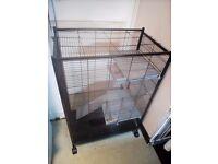 Parrot ,bird ,rat cage