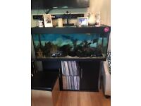 4ft fish tank, all accessories included and cichlids