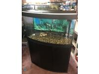 Fruval Venezia 3ft bow front tank aquarium