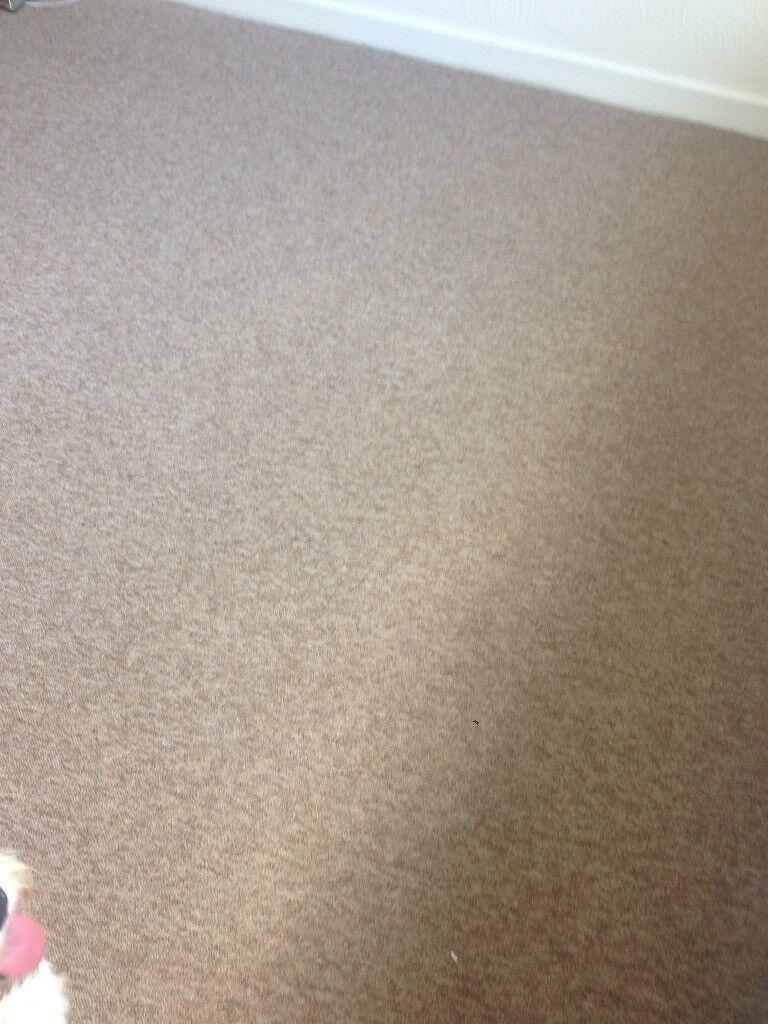 Roll End Carpet - Harvest Brown