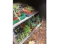Flowering plants mostly Annuals £1