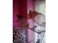 Budgies & Aviary