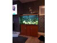 4 foot Boyu fish tank and stand