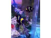 Fishes for marine aquarium