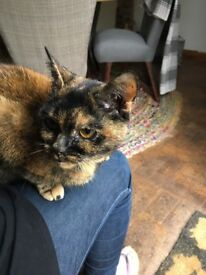 Lost Cat Missing Cat, can you help? Last seen Fishing Lakes, Datchet - Horton.